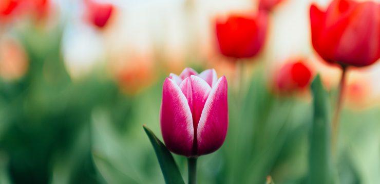 Spring Equinox Renewal, Rebirth  and Growth Celebration and Ritual